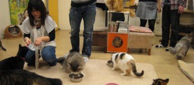O café dos gatos