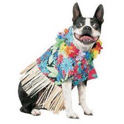 Porque os animais detestam o Carnaval 1