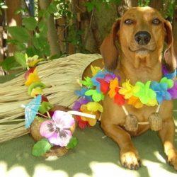 Porque os animais detestam o Carnaval 3