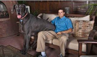 O maior cão do mundo 1