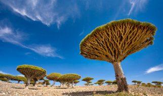 As maravilhas naturais mais estranhas do mundo (III) 1