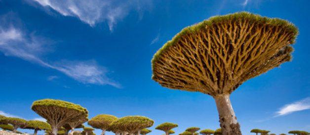 As maravilhas naturais mais estranhas do mundo (III)