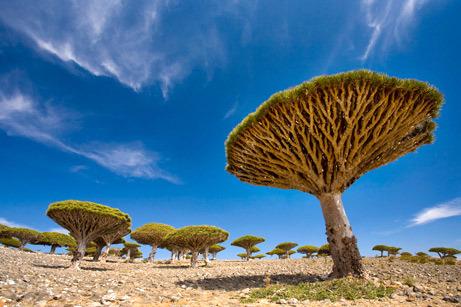 As maravilhas naturais mais estranhas do mundo (III) 3