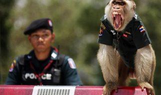 O macaco policia 1