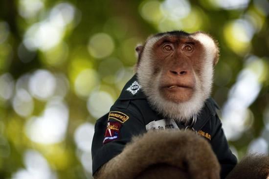 O macaco policia 4