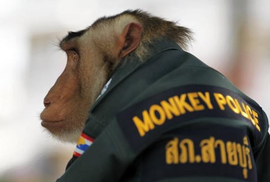 O macaco policia 5