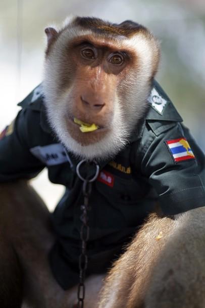 O macaco policia 7
