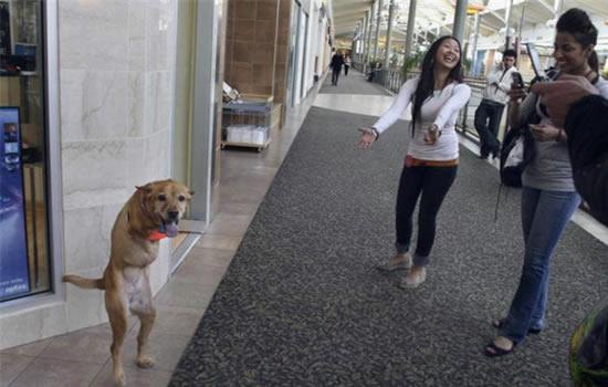 Faith : a cadela com 2 patas 2