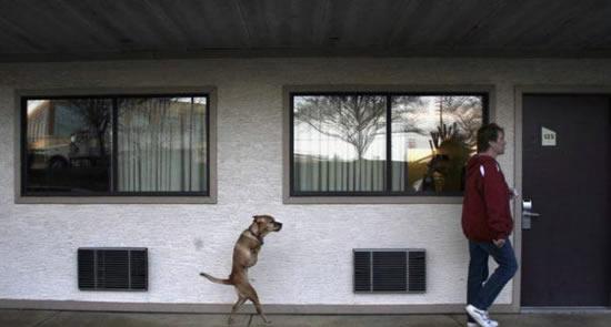Faith : a cadela com 2 patas 1
