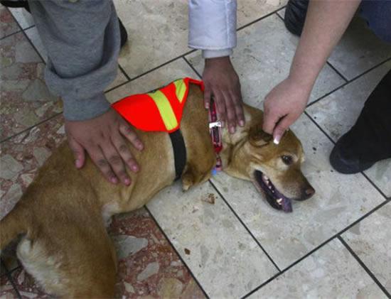 Faith : a cadela com 2 patas 9