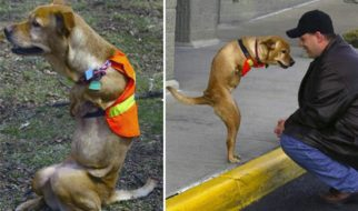 Faith : a cadela com 2 patas 3