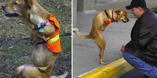 Faith : a cadela com 2 patas