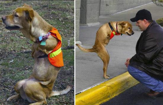 Faith : a cadela com 2 patas 11