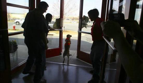 Faith : a cadela com 2 patas 8