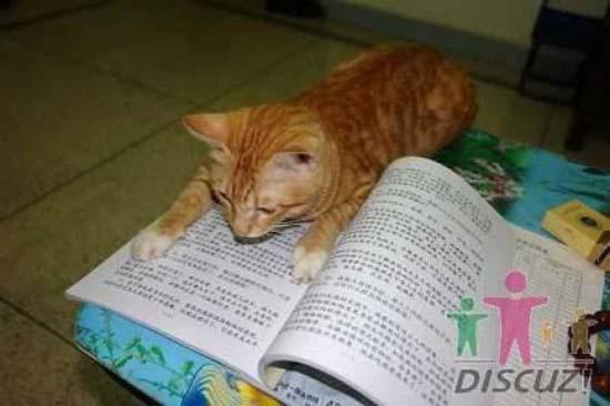 Um gato especial 1