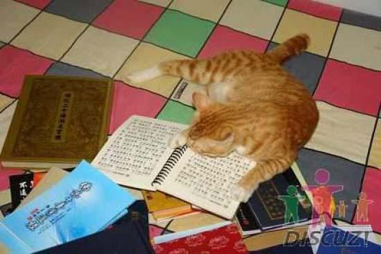 Um gato especial 4