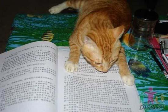 Um gato especial 5