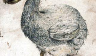 O último dodo vivo 2