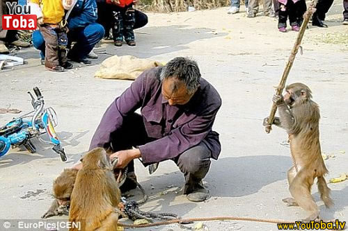 Humanos atacados por animais 1