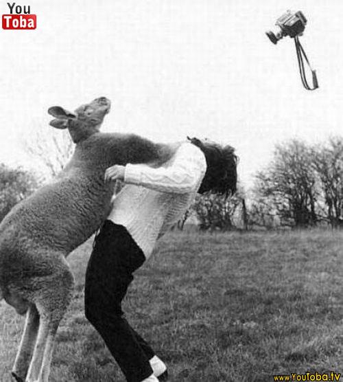 Humanos atacados por animais 2