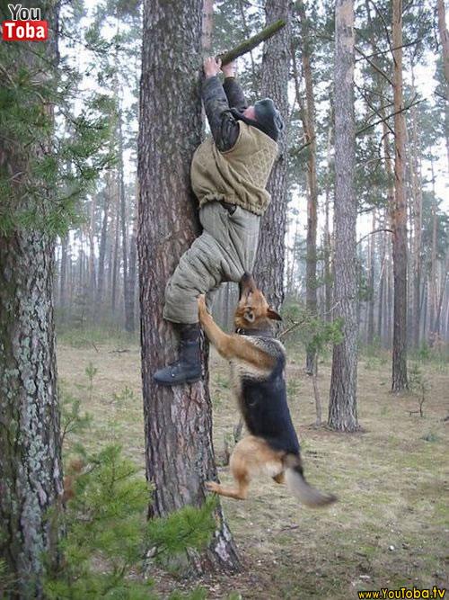 Humanos atacados por animais 3