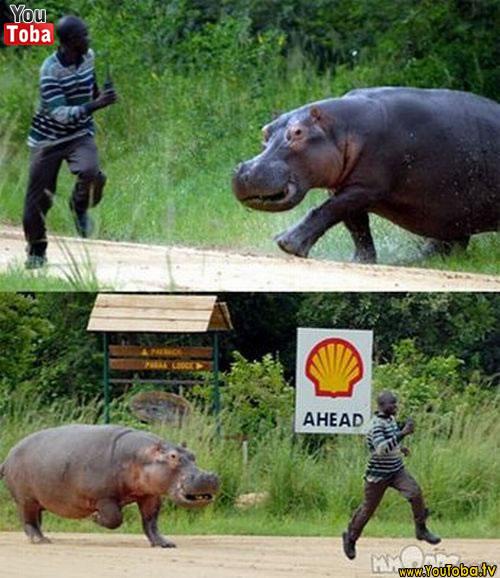 Humanos atacados por animais 6