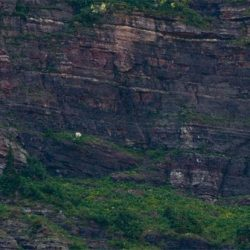 Cabras alpinistas 1