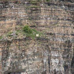Cabras alpinistas 18