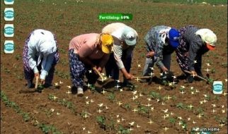 Farmville na vida real 5