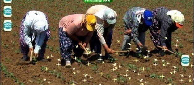 Farmville na vida real