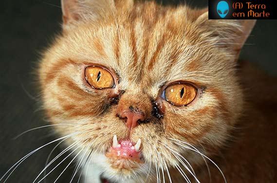 Os dez gatos mais feios de toda a internet 8