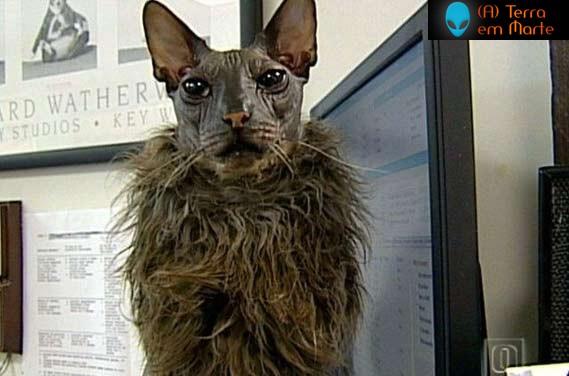 Os dez gatos mais feios de toda a internet 1