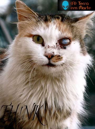 Os dez gatos mais feios de toda a internet 3