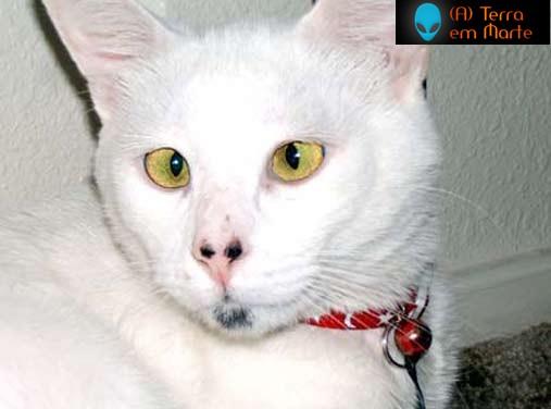 Os dez gatos mais feios de toda a internet 5