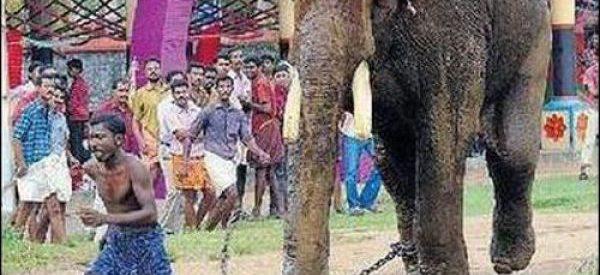 Não troque o seu cão por um elefante
