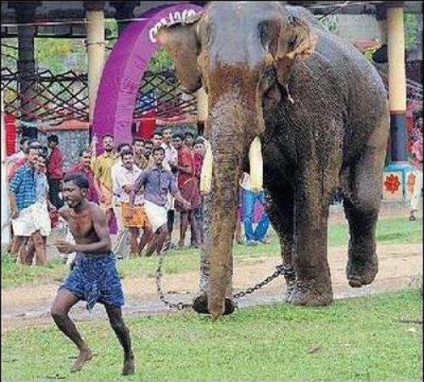 Não troque o seu cão por um elefante 1