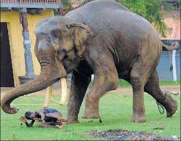 Não troque o seu cão por um elefante 4