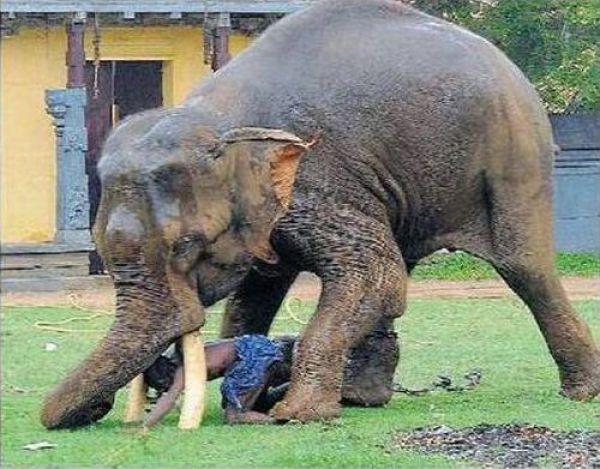 Não troque o seu cão por um elefante 5