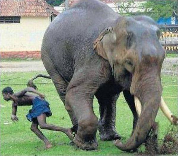 Não troque o seu cão por um elefante 7