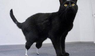 Oscar o gato biónico 3