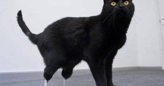 Oscar o gato biónico