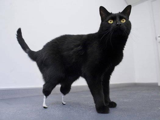 Oscar o gato biónico 1