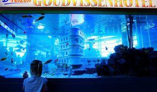 Primeiro hotel para peixes do mundo 3