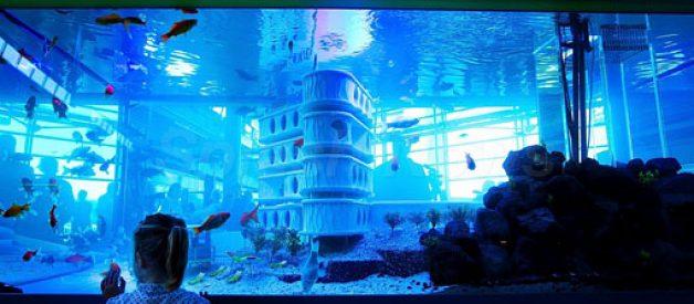 Primeiro hotel para peixes do mundo