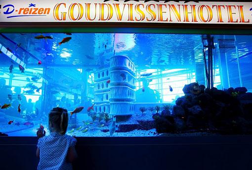 Primeiro hotel para peixes do mundo 2