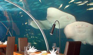 Ithaa, um restaurante debaixo de água 1