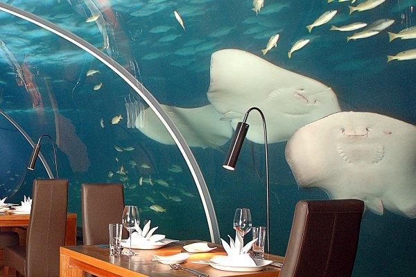 Ithaa, um restaurante debaixo de água 4