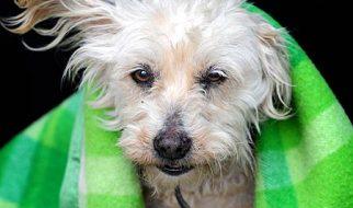 Uma cadela volta para casa após 9 anos perdida 3