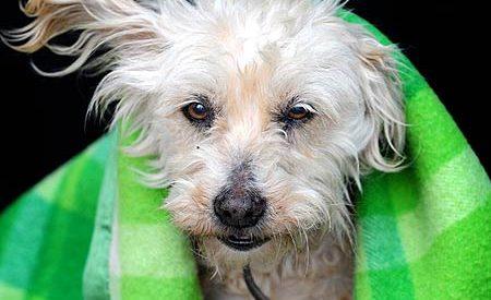Uma cadela volta para casa após 9 anos perdida
