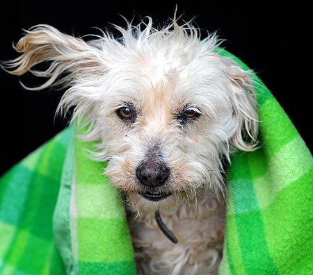 Uma cadela volta para casa após 9 anos perdida 1